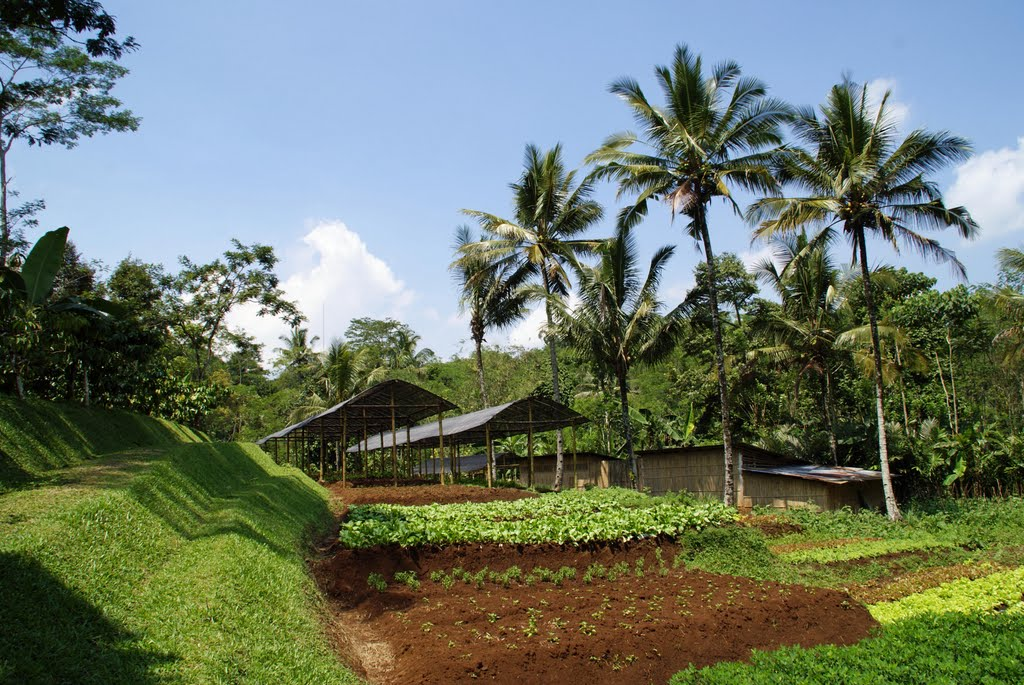 Indonesia Java Mesa Stila